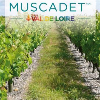 Vignes, vins, randos – 6 septembre 2014