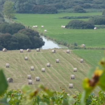 Les Marais de Goulaine depuis la Butte-de-la-Roche